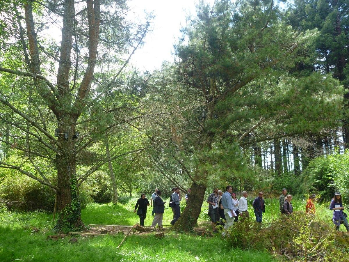 monterey pine shelter