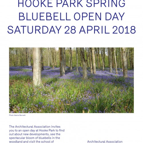 2018 Bluebell day_cropped_reduced size-1